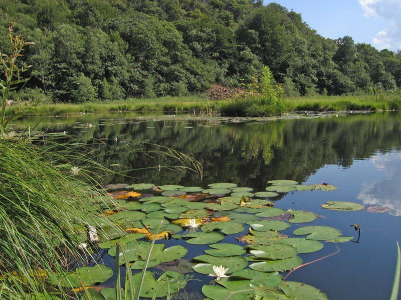 Alghe coniugate 2 forum natura mediterraneo forum for Laghetto alghe
