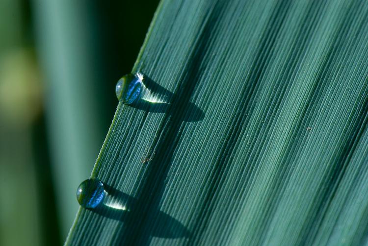 La Diaccia Botrona - Padule di Castiglione della Pescaia