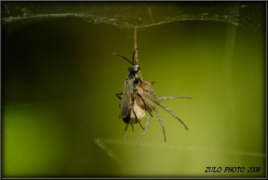 alcuni insetti di Castel Fusano