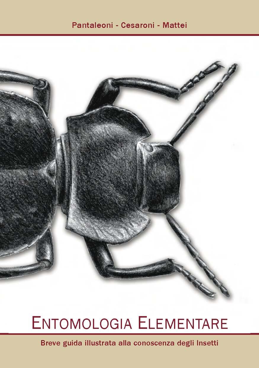 Entomologia Elementare - Breve guida illustrata ...