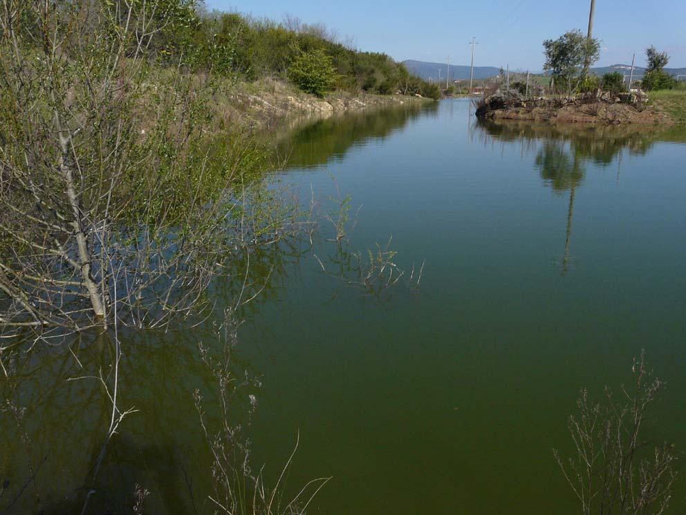 Lago artificiale da naturalizzare in piena maremma for Animali da laghetto artificiale