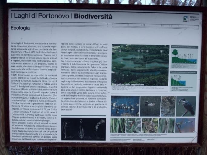 I laghetti di Portonovo