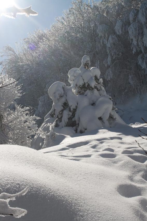 per i sentieri del Monte Catria (2°)