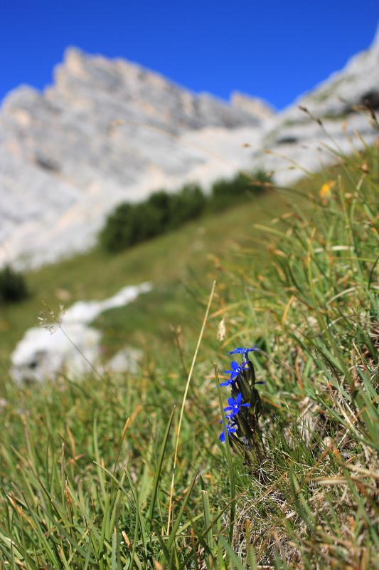 Nel gruppo del Sorapìss (Dolomiti)
