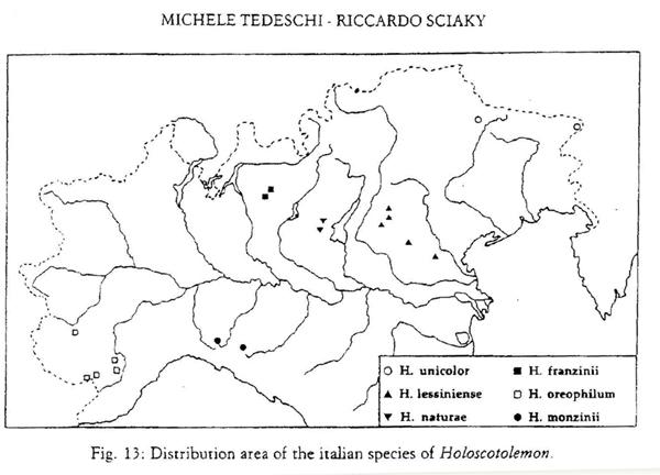 Opiliones d''Italia: elenco, fotografare, specie simile, ecc.
