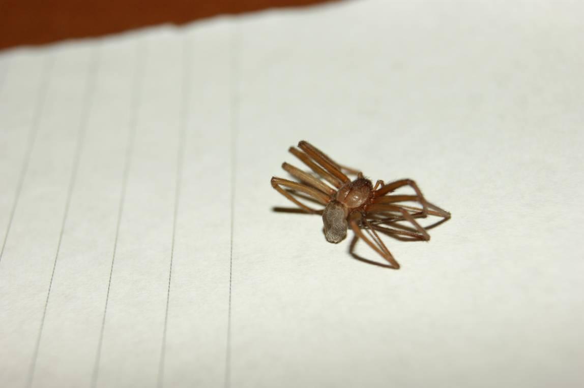 Davvero è morto a causa di un ragno? Ecco la verità