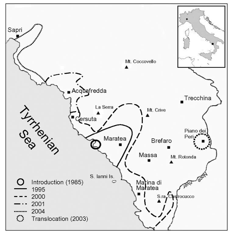 Scoiattolo Variabile - Callosciurus finlaysonii