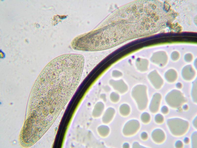 Microscopy Forum Microbehunter Microscopy Magazine