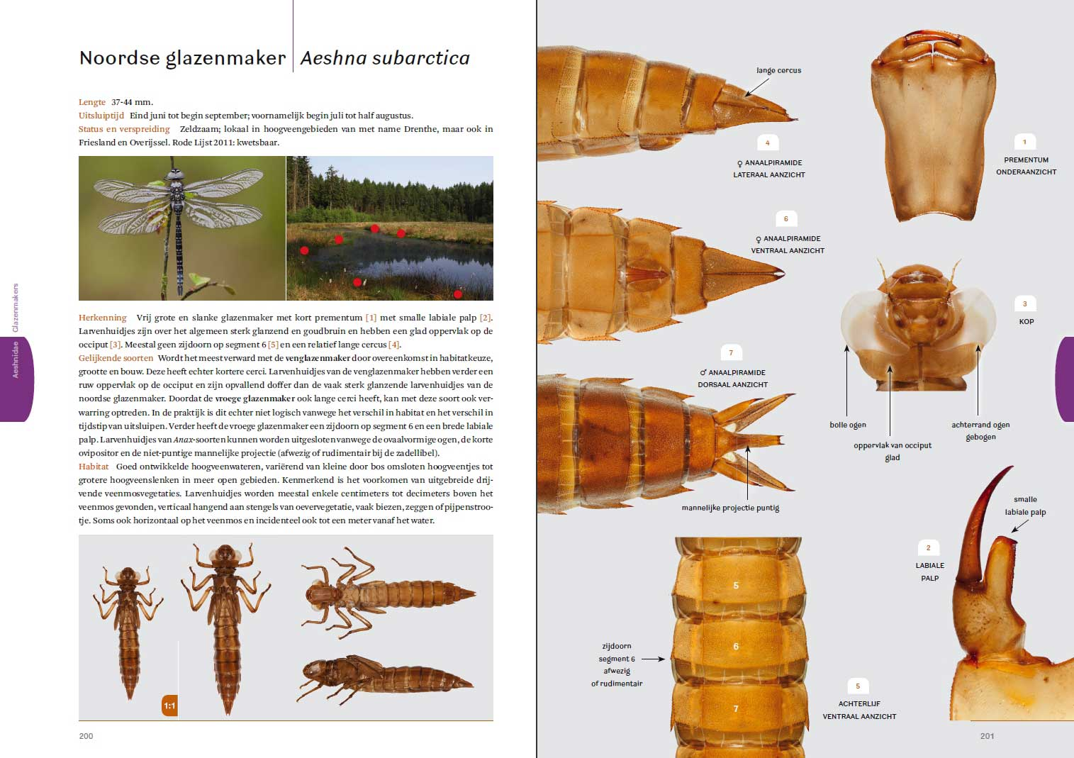 Photographic Guide to the Exuviae of European Dragonflies