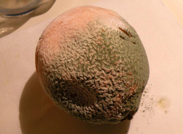 Muffa dell''arancia