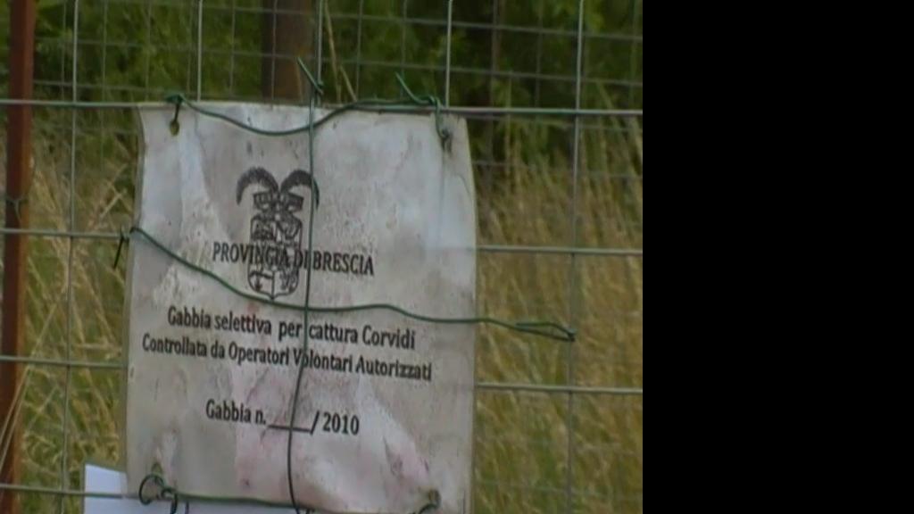 Trappola per corvidi forum natura mediterraneo forum for Trappola per gazze