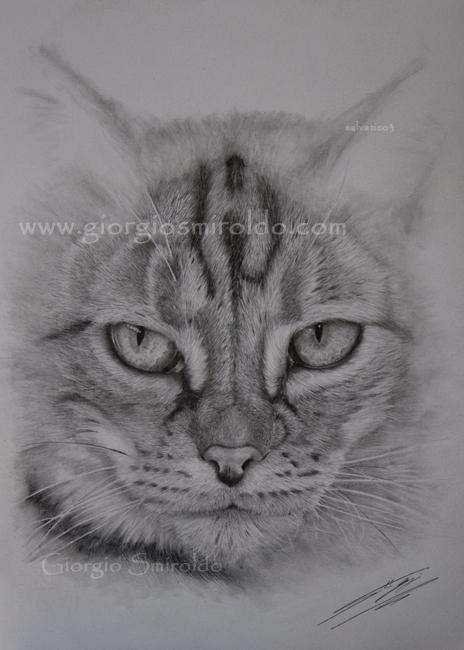 Disegni realistici Gatti a Matita