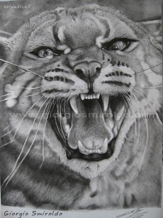 Disegni matita selvatico3 giorgio smiroldo forum for Disegno gatto facile