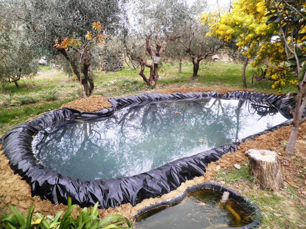 Stagno in costruzione forum natura mediterraneo forum for Stagno artificiale