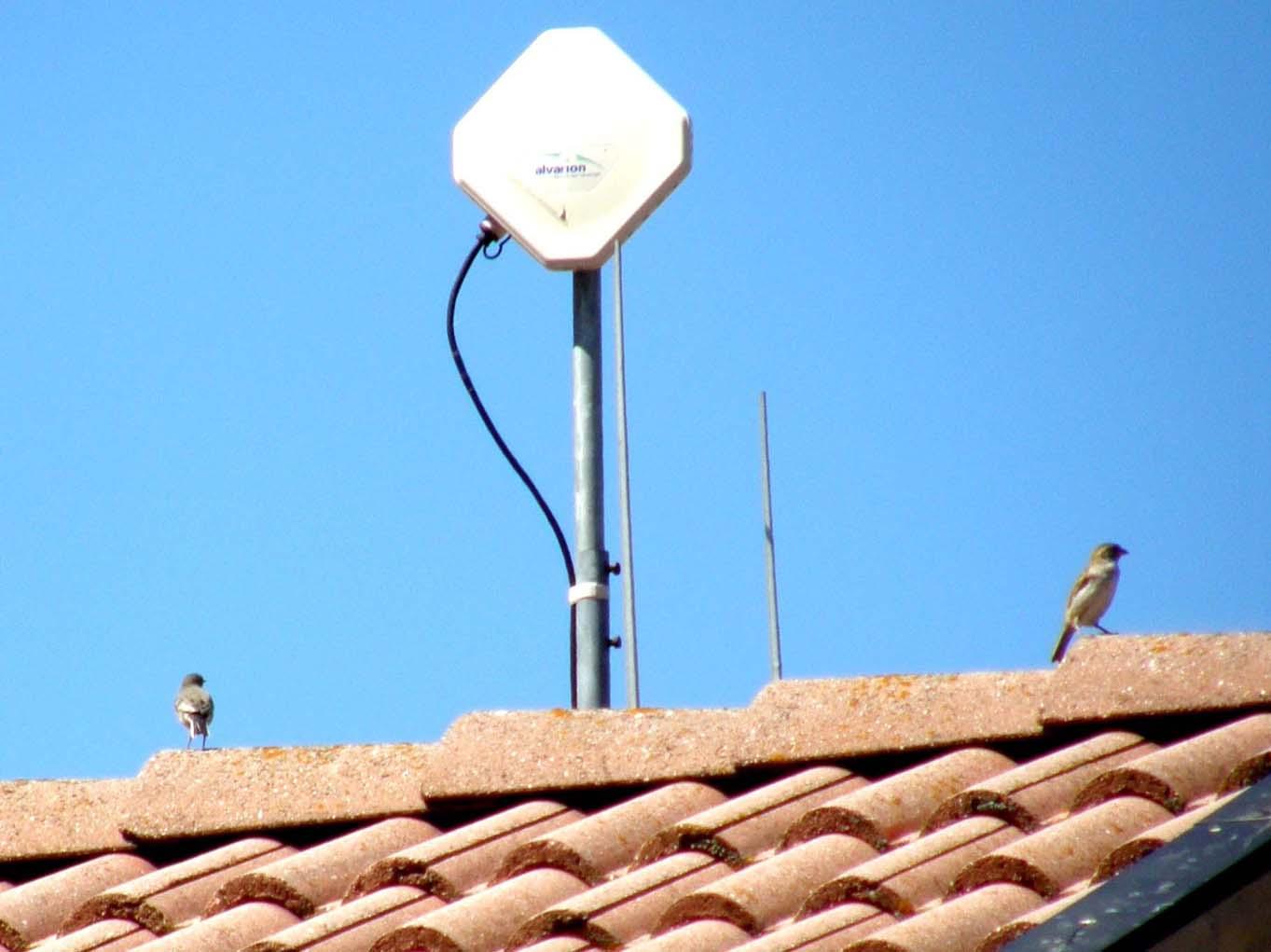 Sul tetto della casa di fronte 3 forum natura for Piani della casa sul tetto