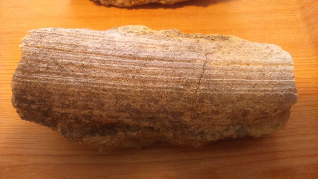 Fossil ID?