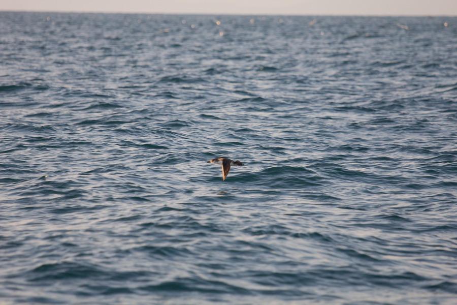 Soggetti in movimento sul mare..