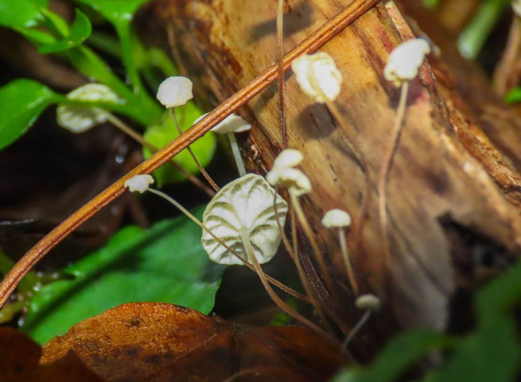 Funghi da identificare