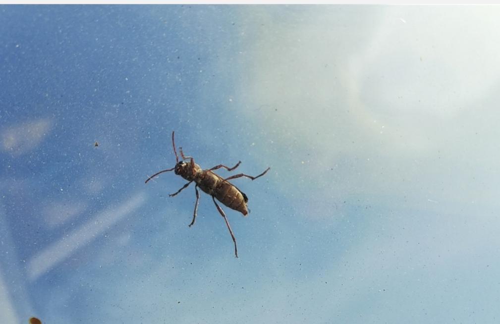 Che insetto è?