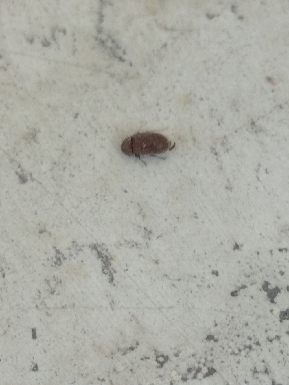 Riconoscente questo insetto??