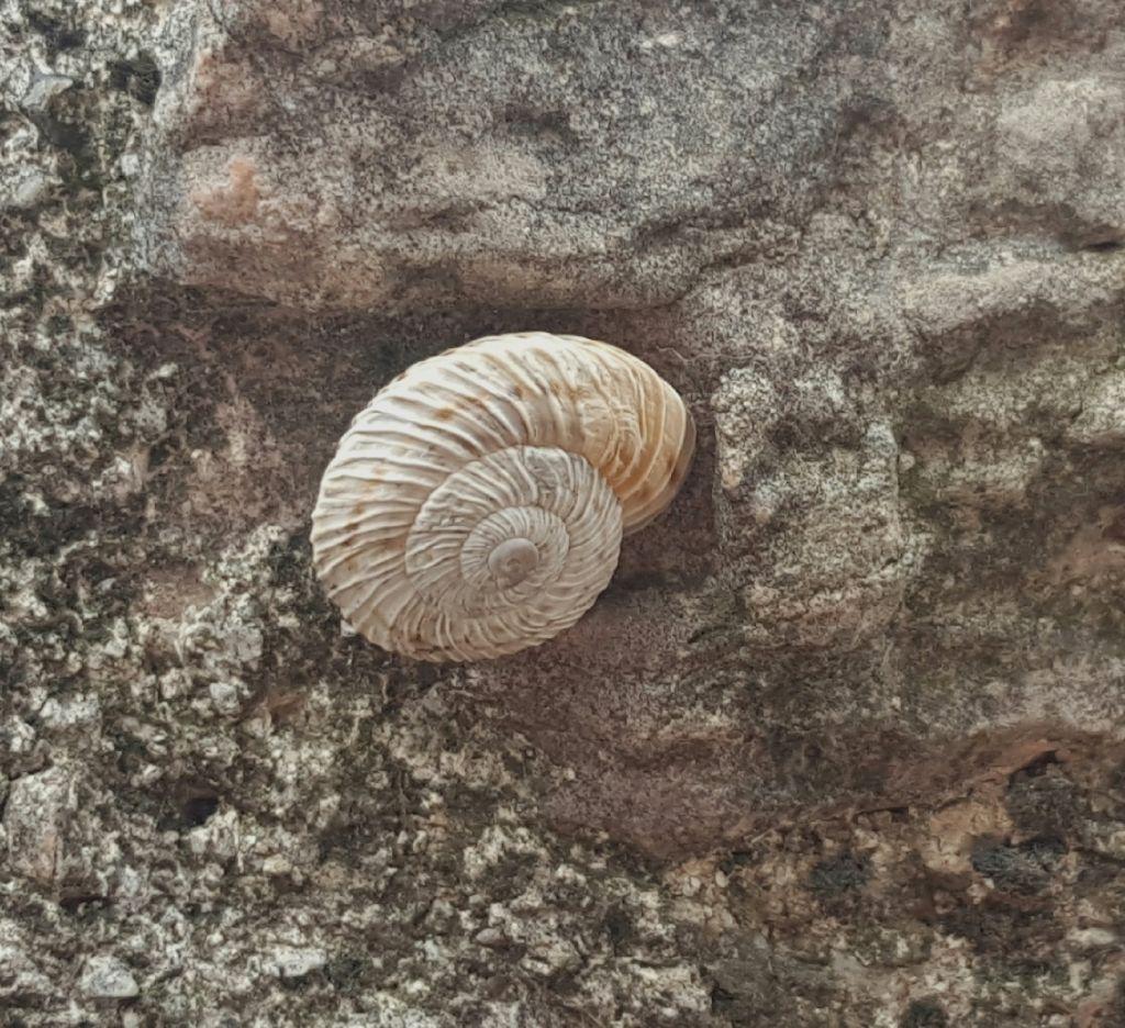 Trovata oggi lungo il fiume Nera - Marmorana signata f. molteni