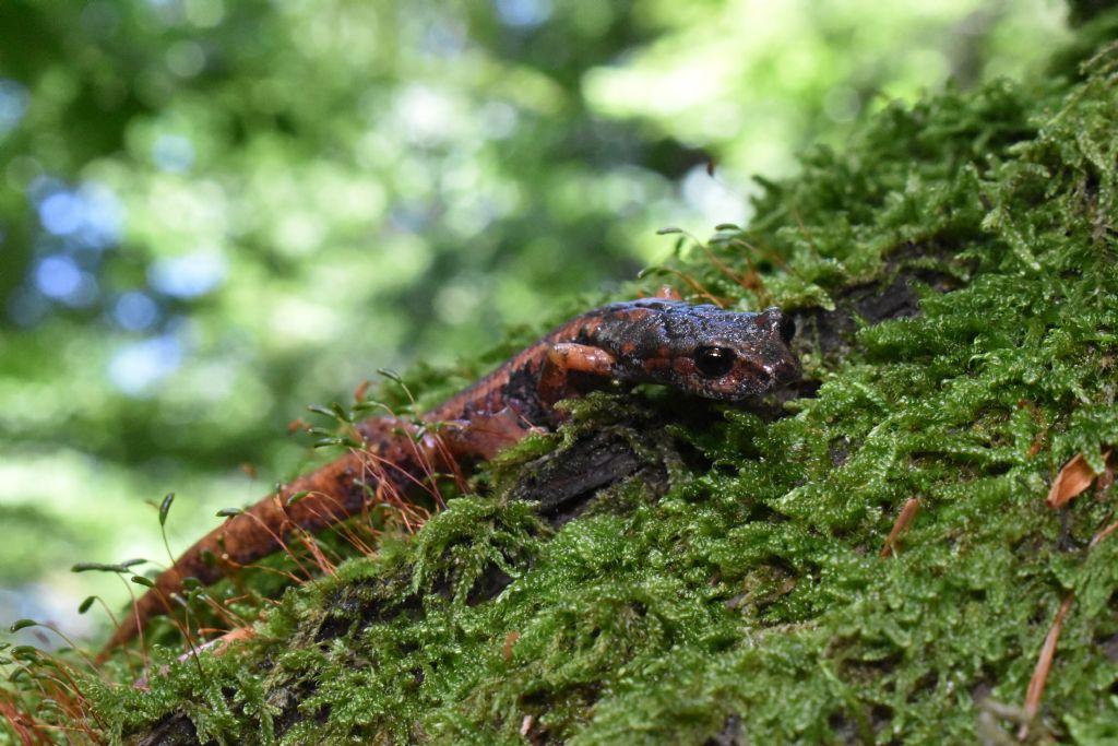 Passeggiata nelle foreste casentinesi