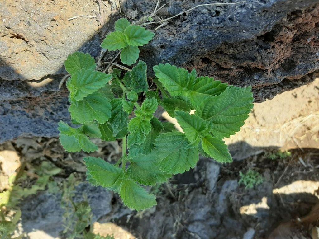 che pianta è questa?