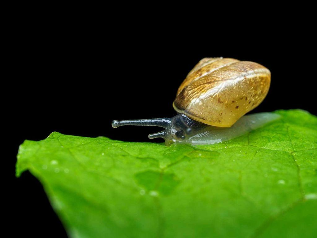 riconoscimento molluschi
