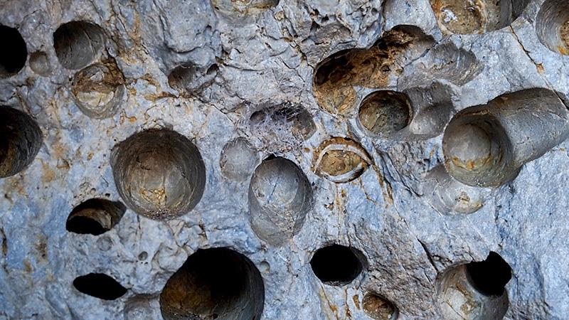 ''''Impronte'''' litofagi su pietra