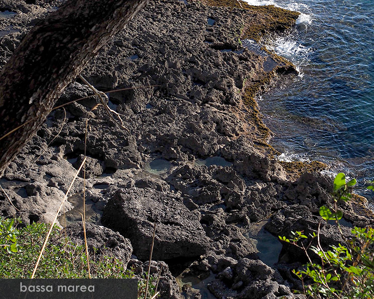 pozze di marea e di scogliera