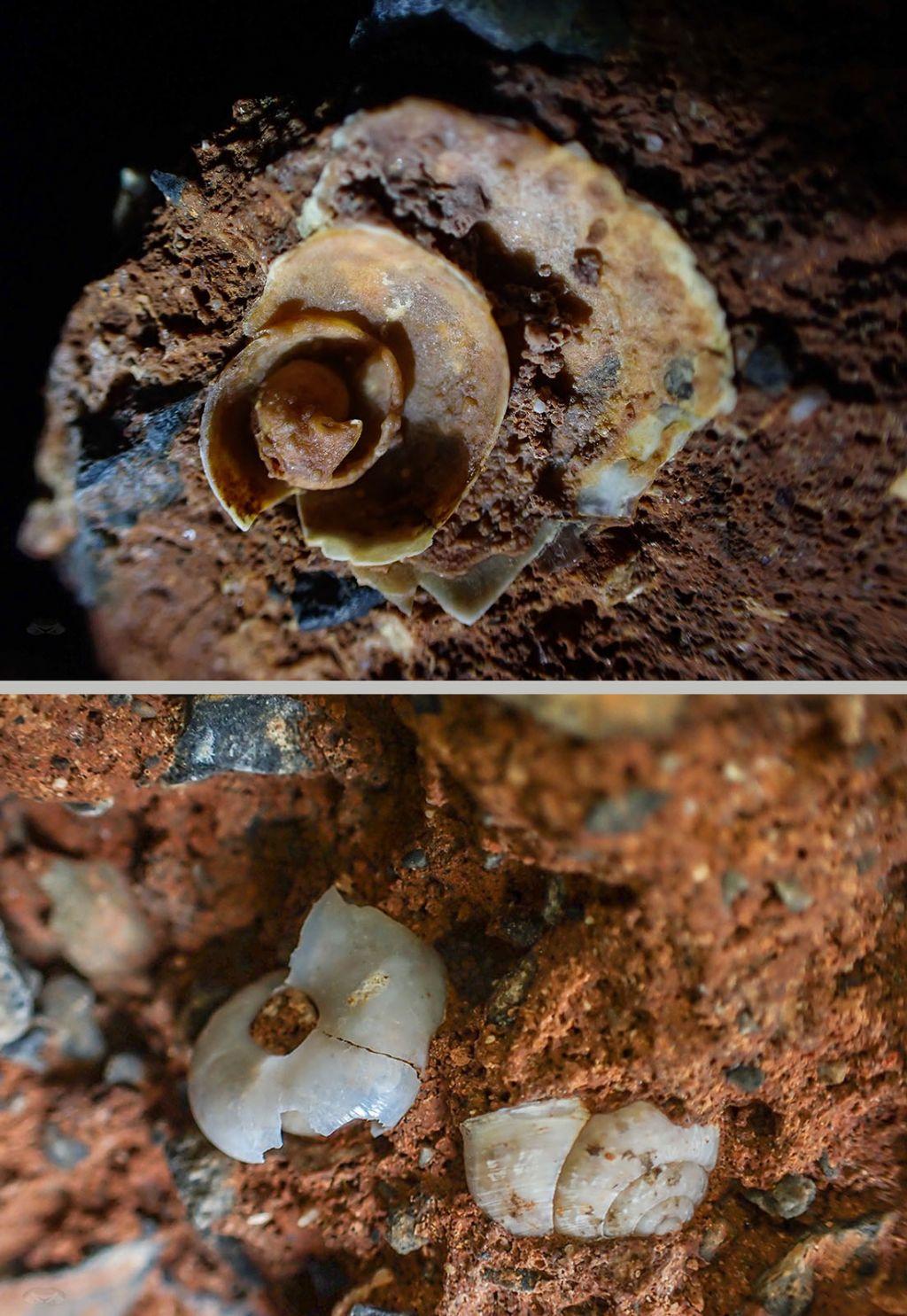 Molluschi interrati e concrezionati