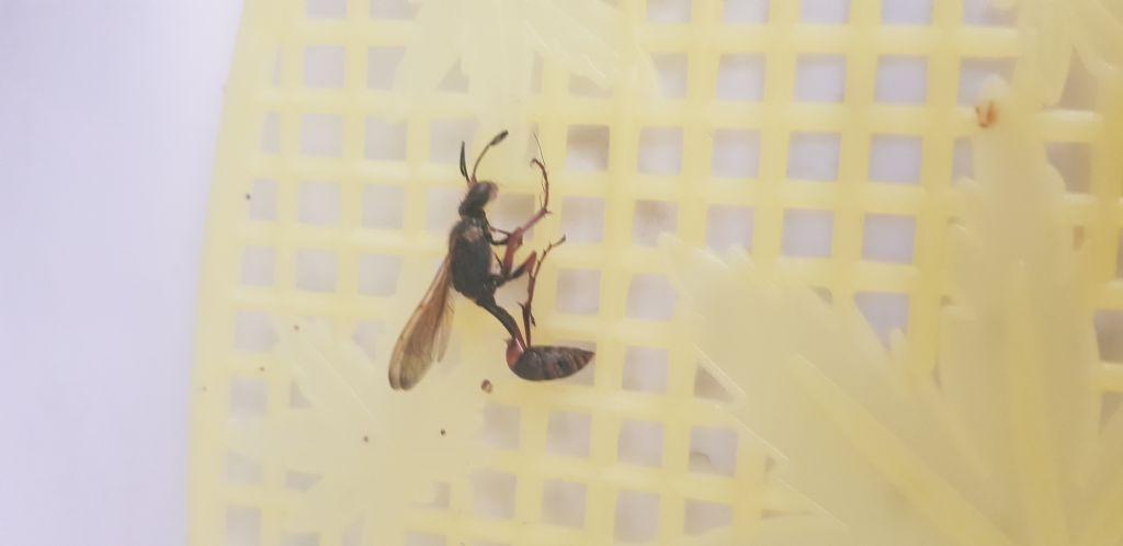 Che insetto è??