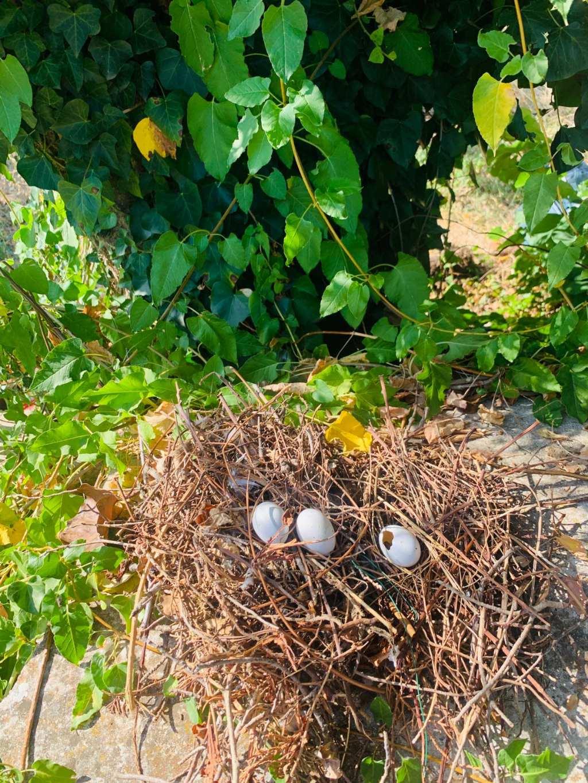 Che uova sono?