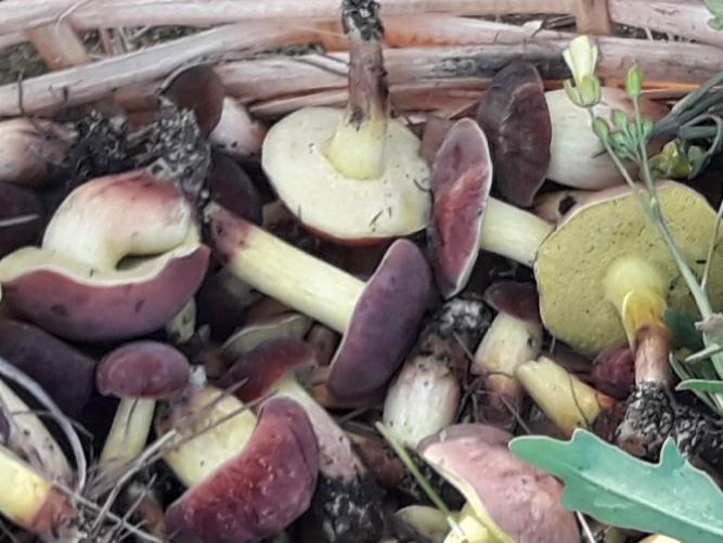 Funghi da determinare