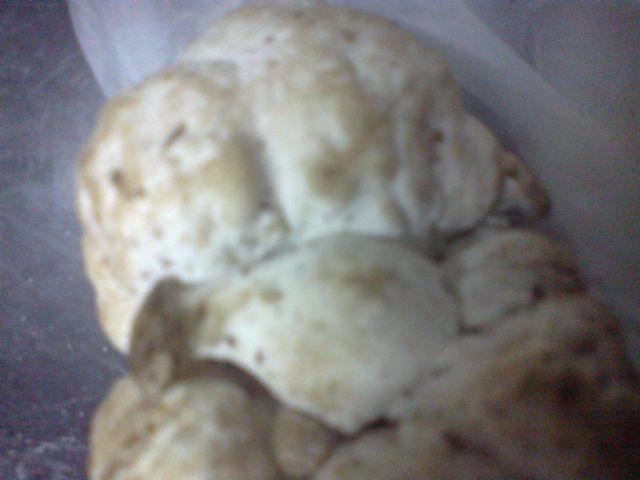In un castagneto sull''appennino in Toscana uno strano fungo