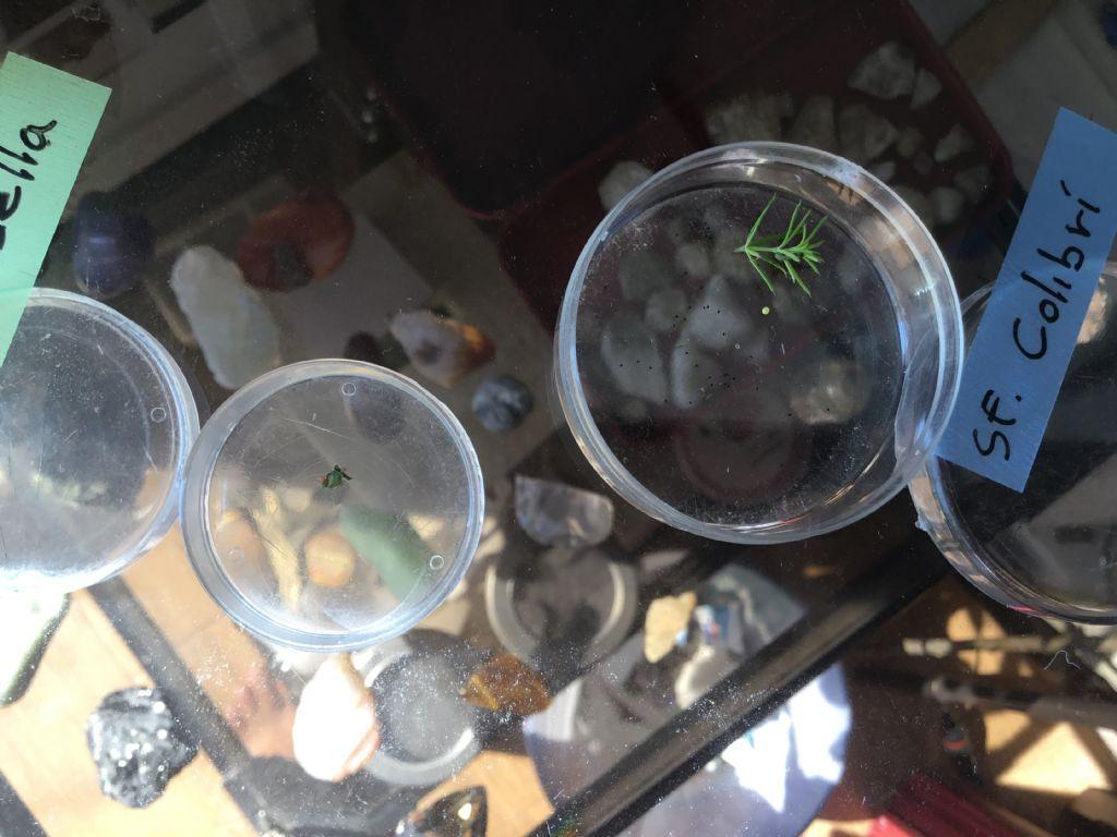 Ho bisogno di aiuto per le uova di alcuni lepidotteri