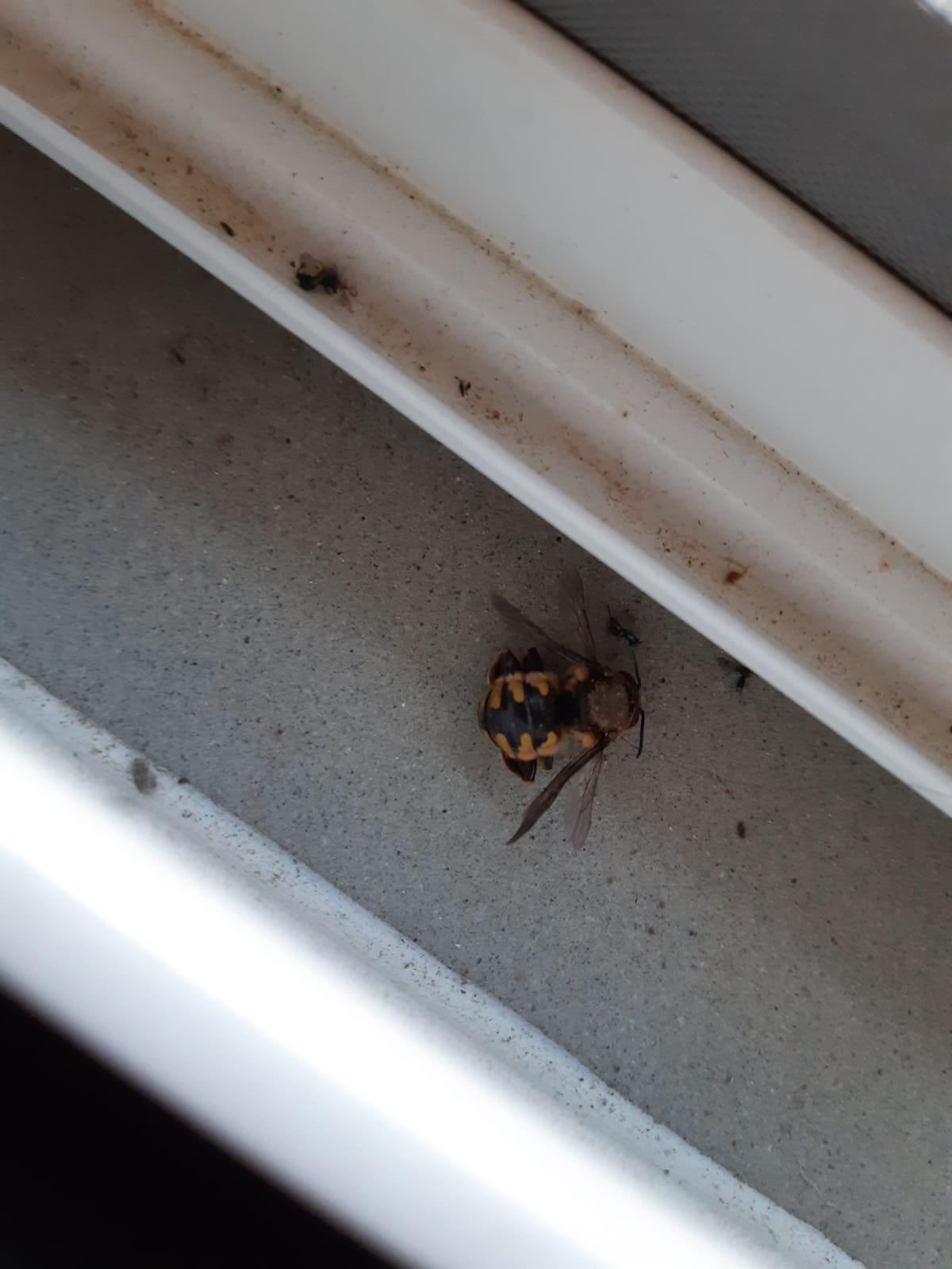Non capisco che tipo di vespa sia