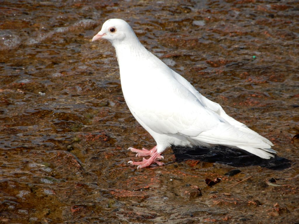 Riconoscimento uccello