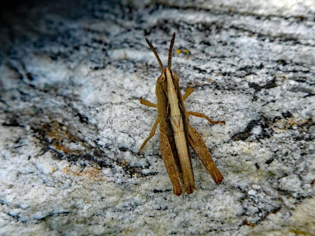 Identificazione insetto