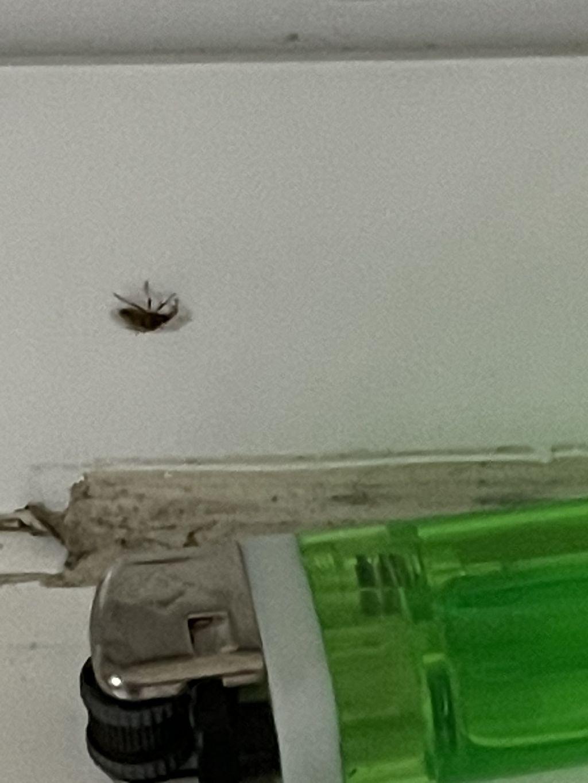 Strani insetti volanti in casa