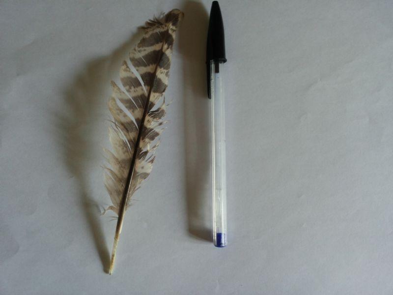 Riconoscimento penna