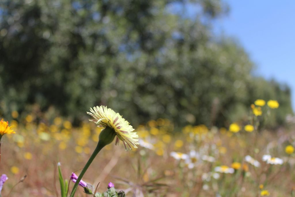 Azienda agricola amica della biodiversità