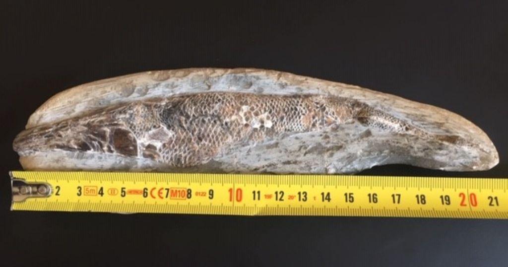 Pesce da daterminare