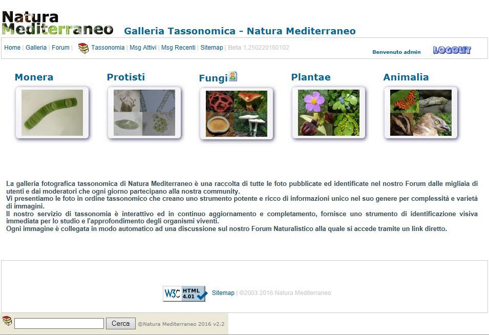 Attivazione Tassonomia testuale con ricerca