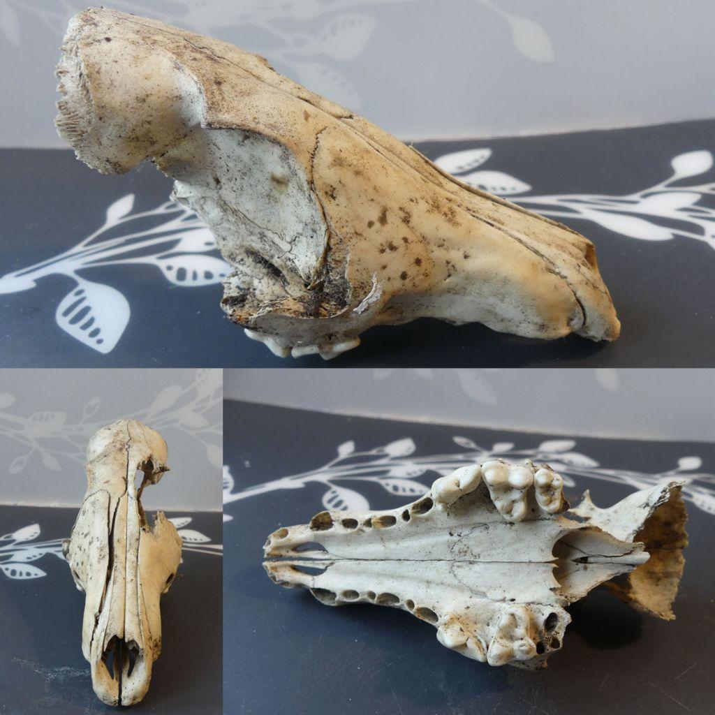 Qualche cranio ritrovato nei boschi del Ticino