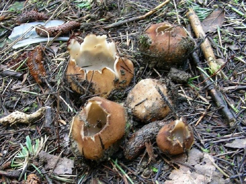 45 Da determinare bosco misto aghifoglia e latifogia 70mt.s.l.m.