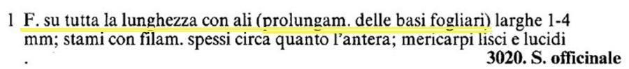 Symphytum tuberosum?  No! Symphytum officinale L.