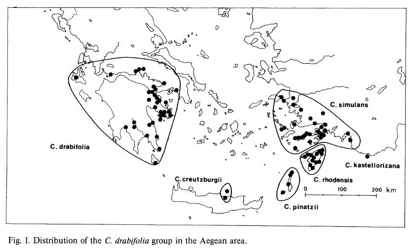 Altra Campanula del Peloponneso: Campanula drabifolia