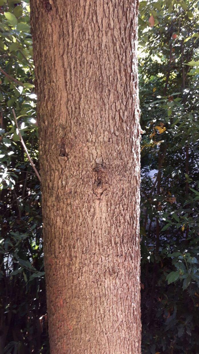 albero da determinare