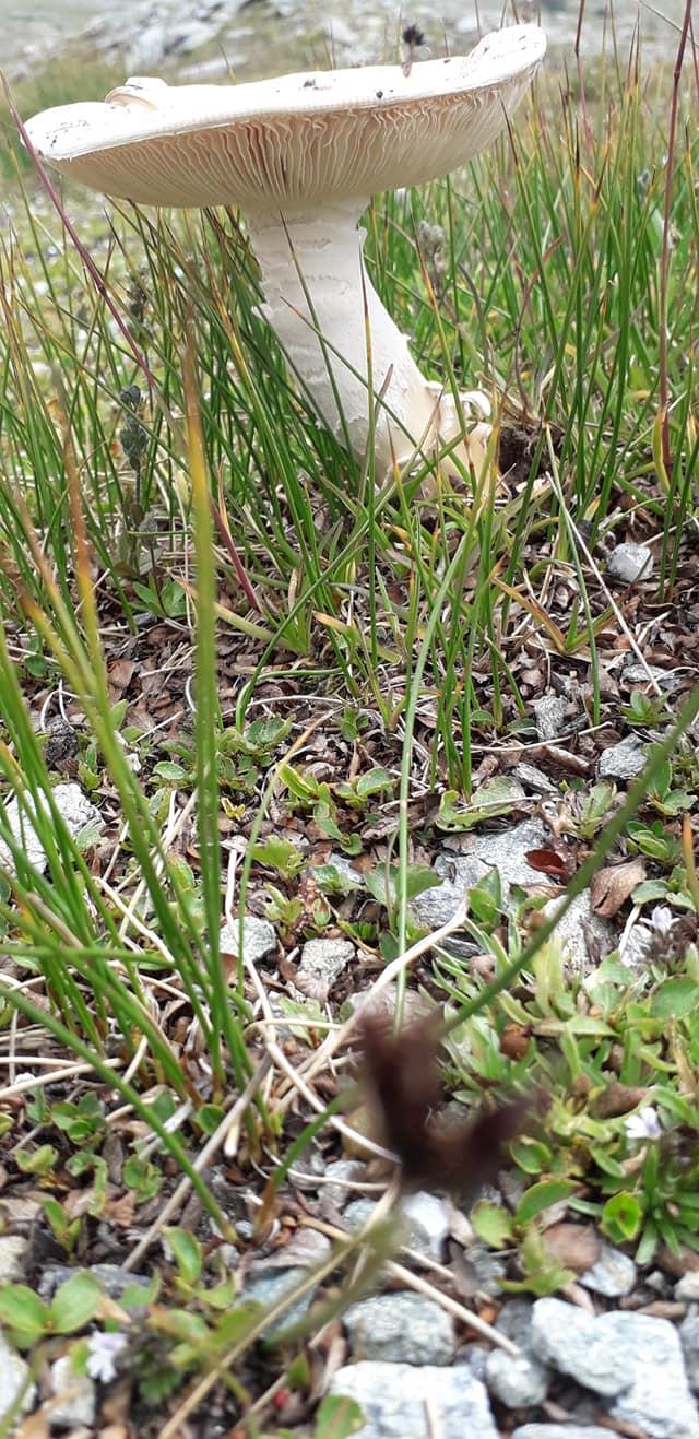 3 funghi trovati oggi da determinare